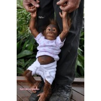 Ming Tao Monkey Kit Sculpted by Simon Laurens PRE ORDER
